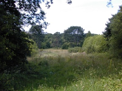 Lower meadow